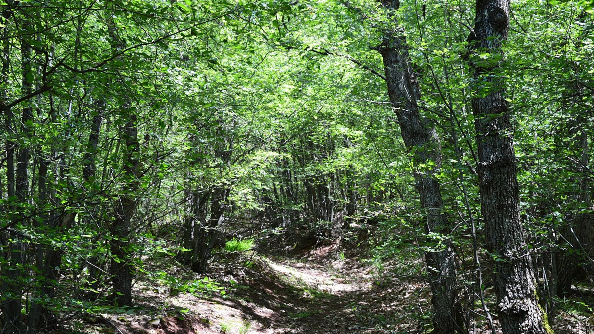 Šuma u Sićevačkoj klisuri
