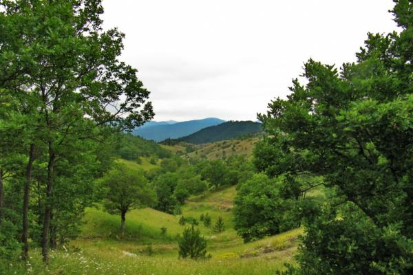 Šargan - Mokra gora